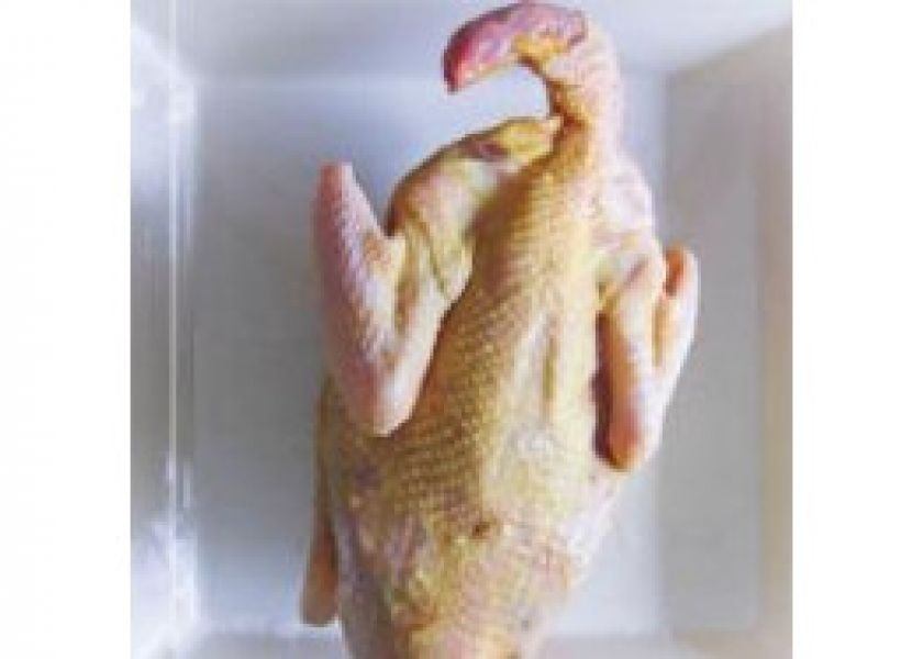 Курица Несушки с головой и лапамы
